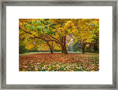 The Leaves Of Autumn Framed Print