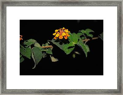 The Life And The Darkness Framed Print by Vijinder Singh