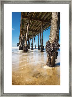 The Life Of A Barnacle Framed Print by Ryan Manuel