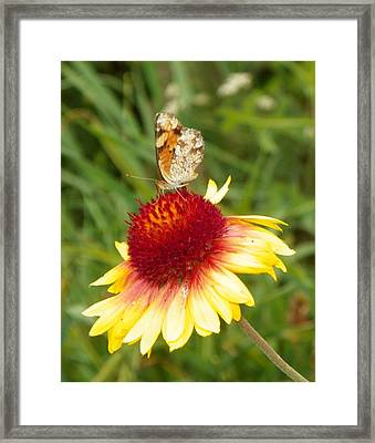 The Life Of A Butterfly Framed Print by Margaret  Slaugh