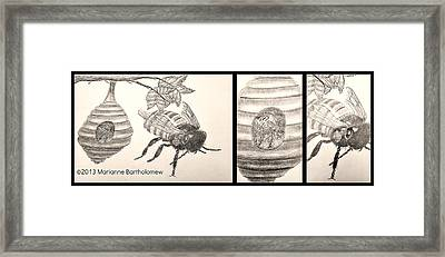 The Life Of The Bee Framed Print by Marianne Bartholomew