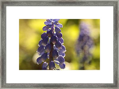 The Lighter Fantastic Framed Print by Connie Handscomb