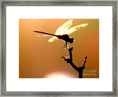 The Light Of Flight Upon The Mosquito Hawk At The Mississippi River In New Orleans Louisiana Framed Print by Michael Hoard