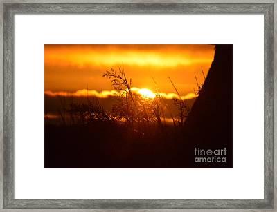 The Light Shines Framed Print by Sheldon Blackwell