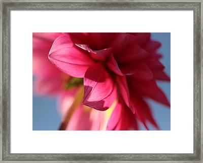The Light Touch Framed Print by Connie Handscomb