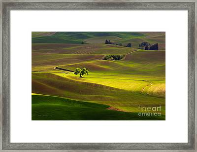 The Light Touch Framed Print by Beve Brown-Clark Photography