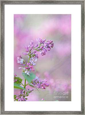 The Lilac Framed Print