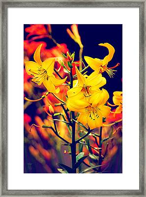 The Lilium Garden - Yellow Whoppers Framed Print by Li   van Saathoff