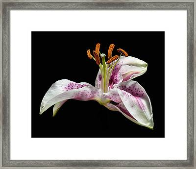 The Lilly Framed Print by Len Romanick