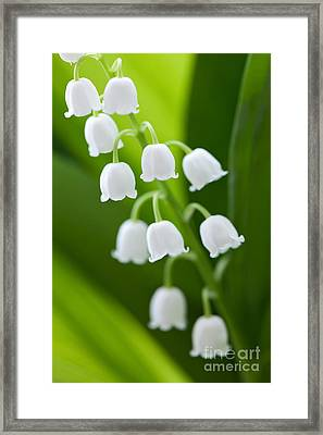 The Lily Of The Valley Framed Print by Boon Mee