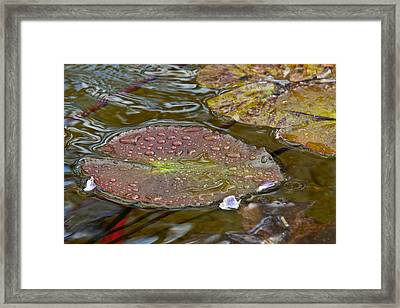 The Lily Pad Framed Print