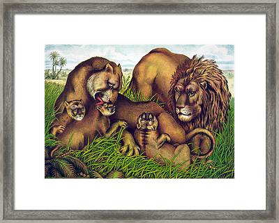The Lion Family Framed Print by Georgia Fowler