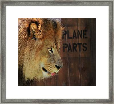 The Lion King Framed Print by Dan Sproul