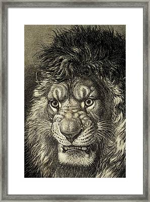 The Lion Framed Print by European School