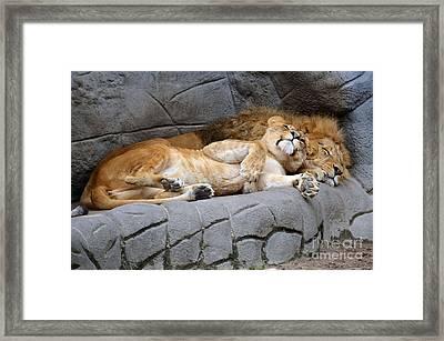 The Lion Sleeps Tonight Framed Print by Eva Kaufman