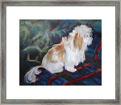 The Little Dog Prince Framed Print by Carol Jo Smidt