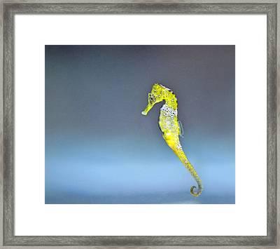 The Little Golden Seahorse Framed Print