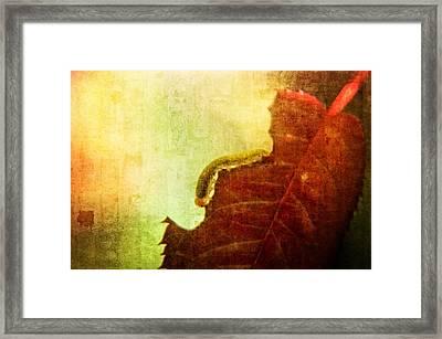 The Little Inchworm Framed Print by Rhonda Barrett