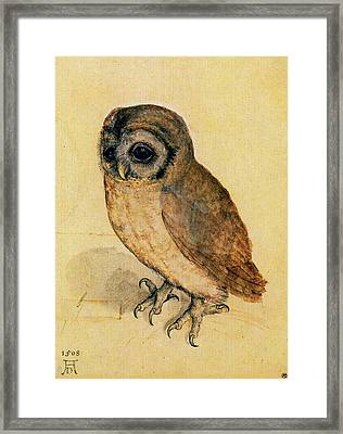 The Little Owl Framed Print by Albrecht Durer