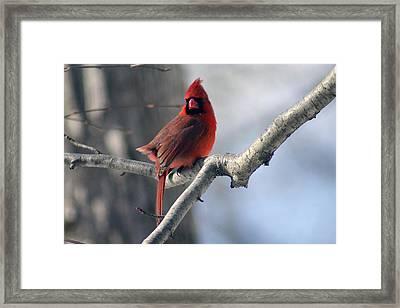 The Little Red Guy Framed Print