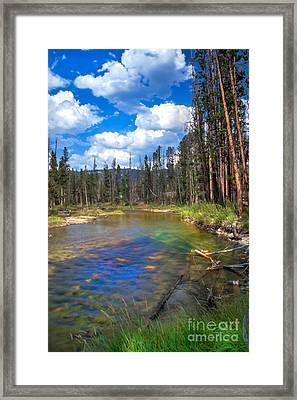 The Little Redfish Creek Framed Print by Robert Bales