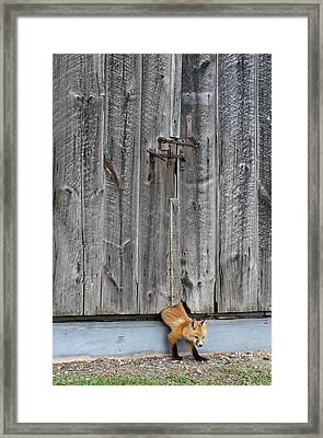 The Little Sneak Framed Print by Bill Morgenstern