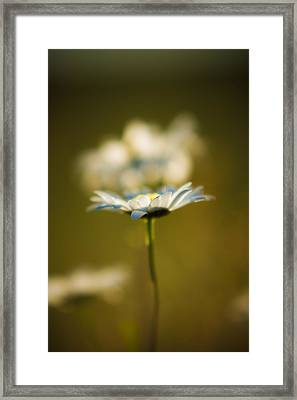 The Little Things In Nature Framed Print by Matt Dobson