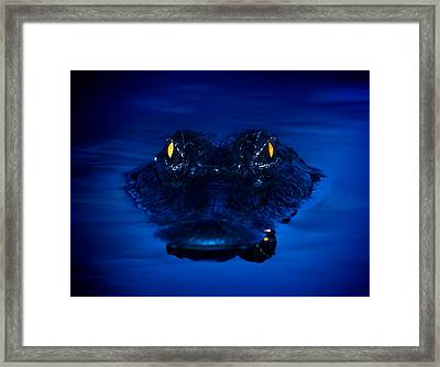 The Littlest Predator Framed Print by Mark Andrew Thomas