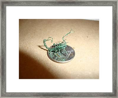 The Littlest Scorpion Framed Print by Scott Faucett