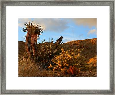The Living Desert In Winter Framed Print