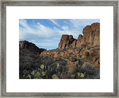 The Living Desert Of Arizona Framed Print
