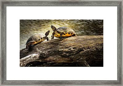 The Log Waltz Framed Print by Karen Wiles