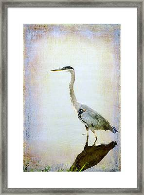The Lone Crane Framed Print by Davina Washington