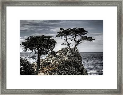 The Lone Cypress Framed Print by Eduard Moldoveanu