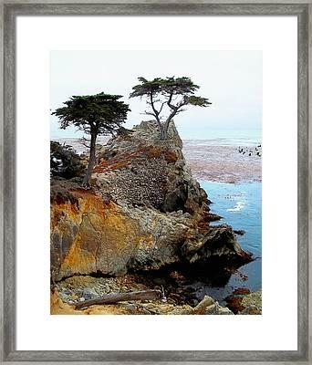 The Lone Cypress - Pebble Beach Framed Print by Glenn McCarthy Art and Photography
