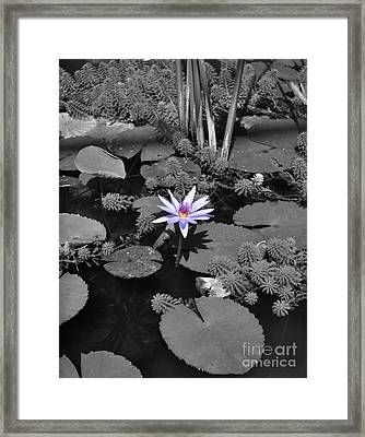The Lone Flower Framed Print