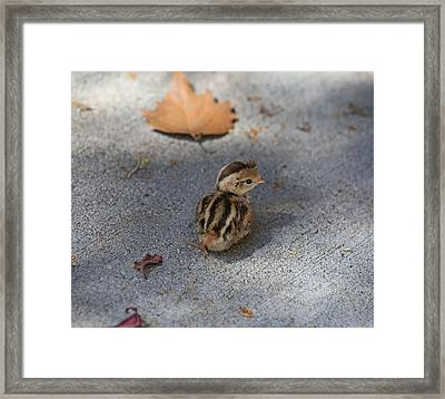 The Lone Survivor Framed Print