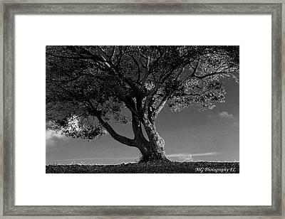 The Lone Tree Black And White Framed Print by Marty Gayler