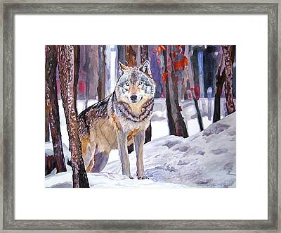The Lone Wolf Framed Print by David Lloyd Glover