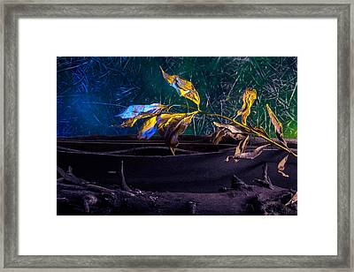 The Lonely Branch Framed Print