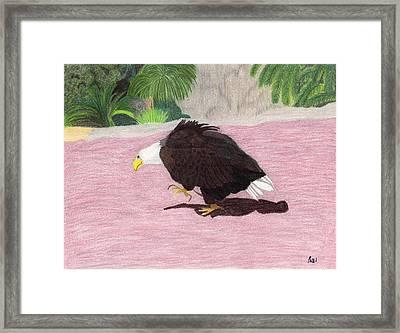 The Lonely Eagle Framed Print by Bav Patel