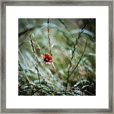 The Lonely Flower Framed Print by Linda Unger