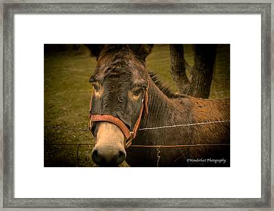 The Lonely Jackass Framed Print by Paul Herrmann