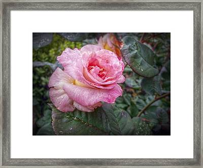 The Lonely One Framed Print by Linda Unger