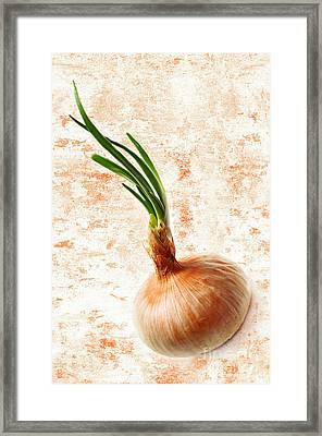 The Lonely Onion Framed Print by Andee Design