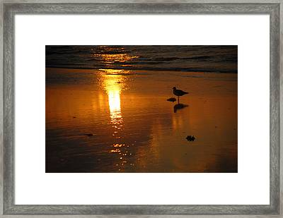 The Lonely Seagull Framed Print