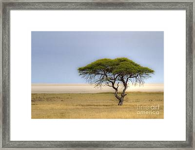 Framed Print featuring the photograph The Lonely Tree by Juergen Klust