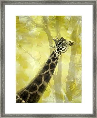 The Long Morning Stretch Framed Print by Diane Schuster