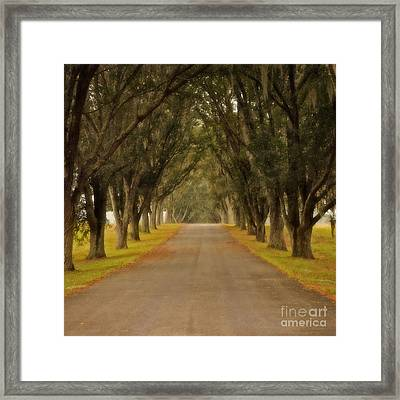 The Long Road - Central Florida Framed Print by Mary Machare