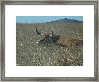 Framed Print featuring the photograph The Longhorn by Alan Lakin